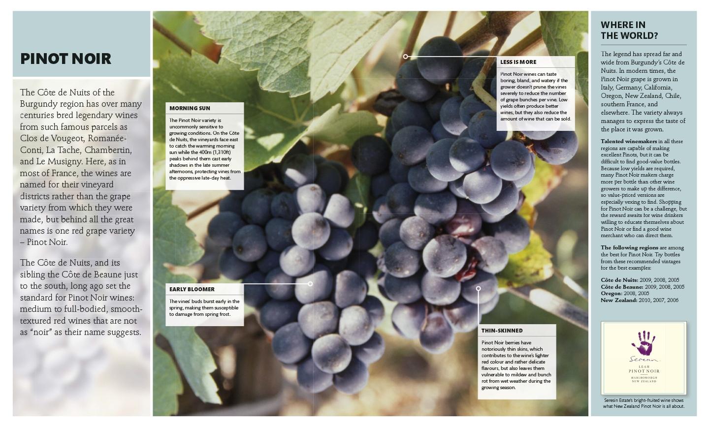 Wine_book_design_by_Designbite_4.jpg